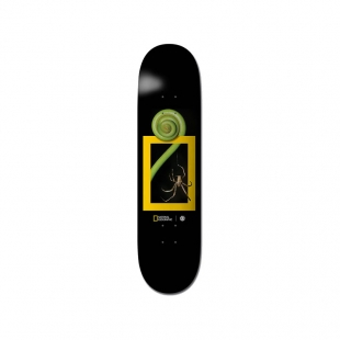 ELEMENT Deck NAT GEO Spider 8.0